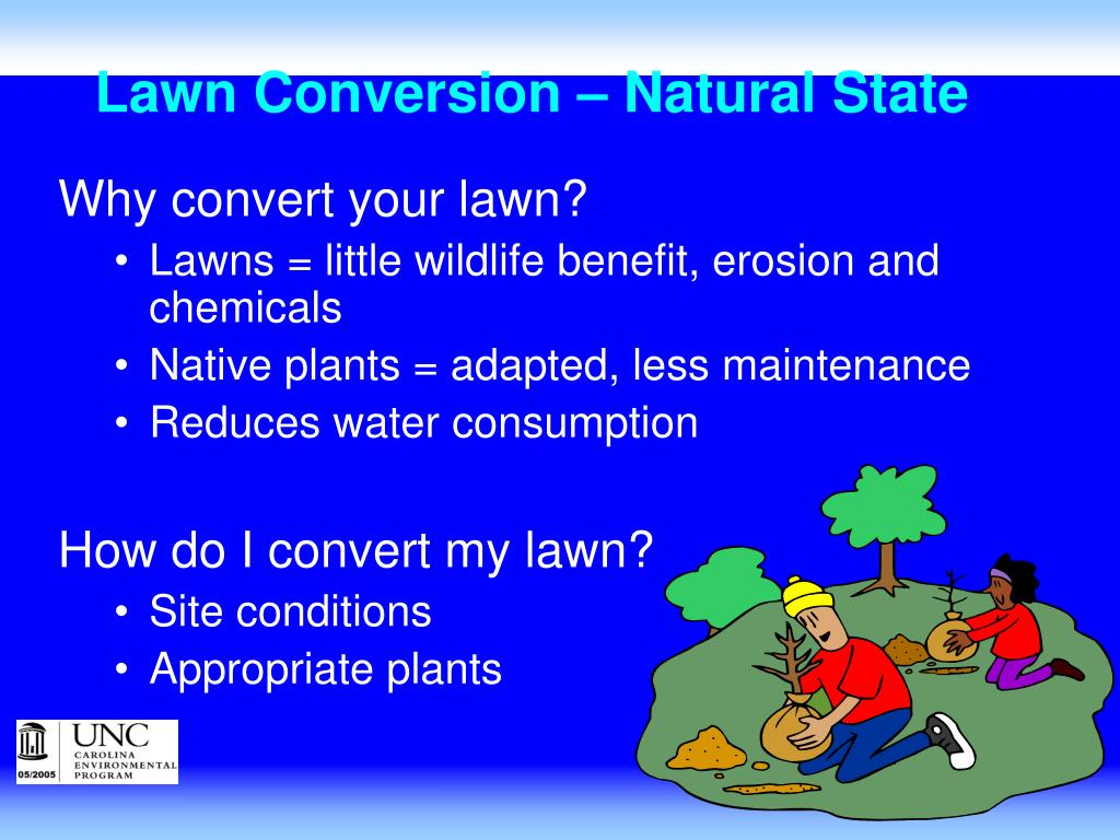 Lawn Conversion – Natural State