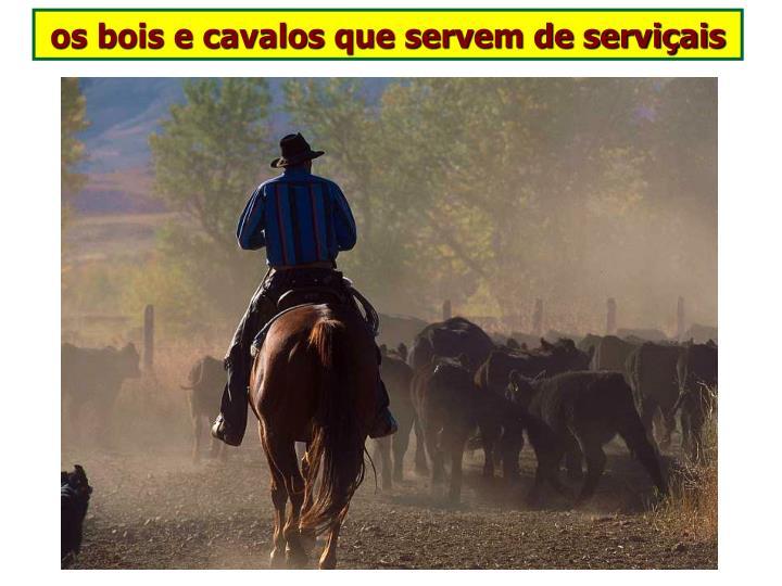 os bois e cavalos que servem de serviçais