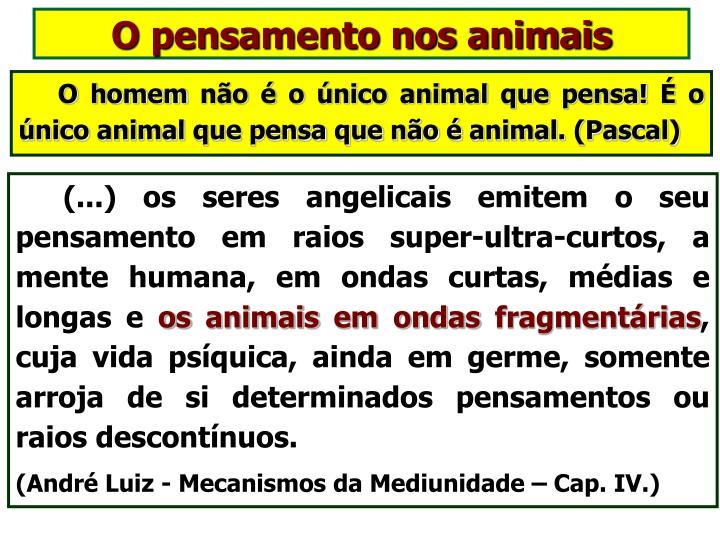 O pensamento nos animais