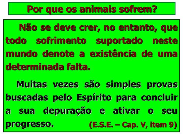 Por que os animais sofrem?