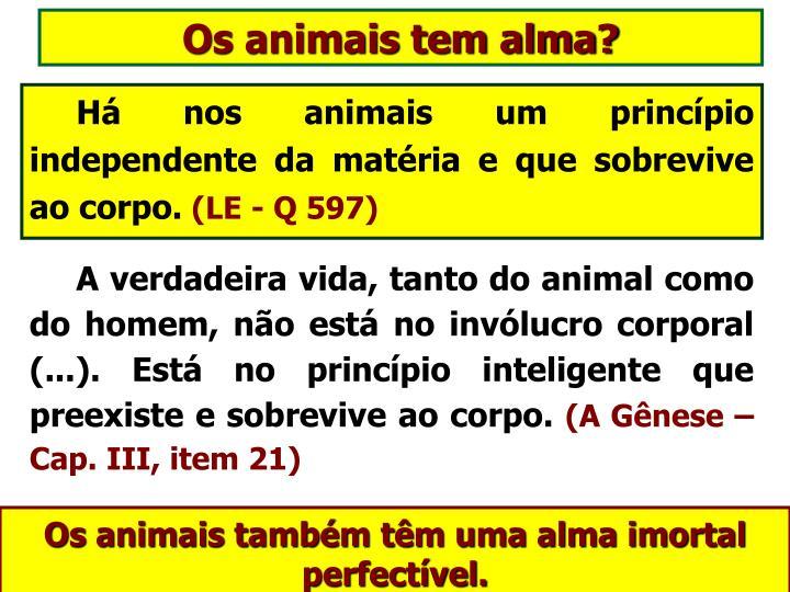 Os animais tem alma?