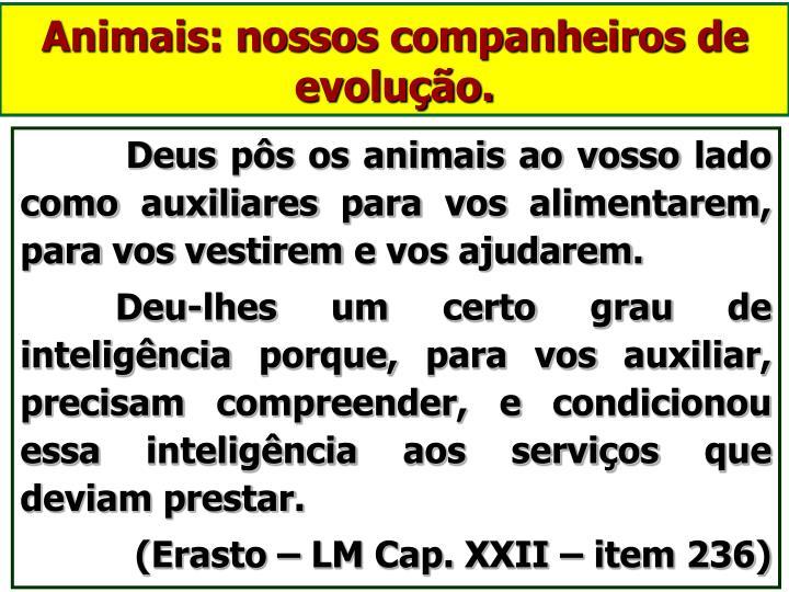 Animais: nossos companheiros de evolução.