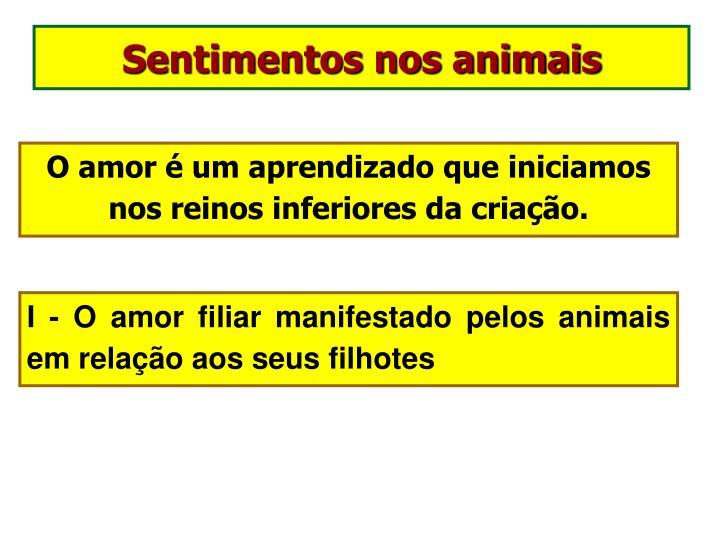Sentimentos nos animais