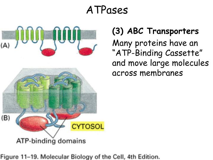 ATPases