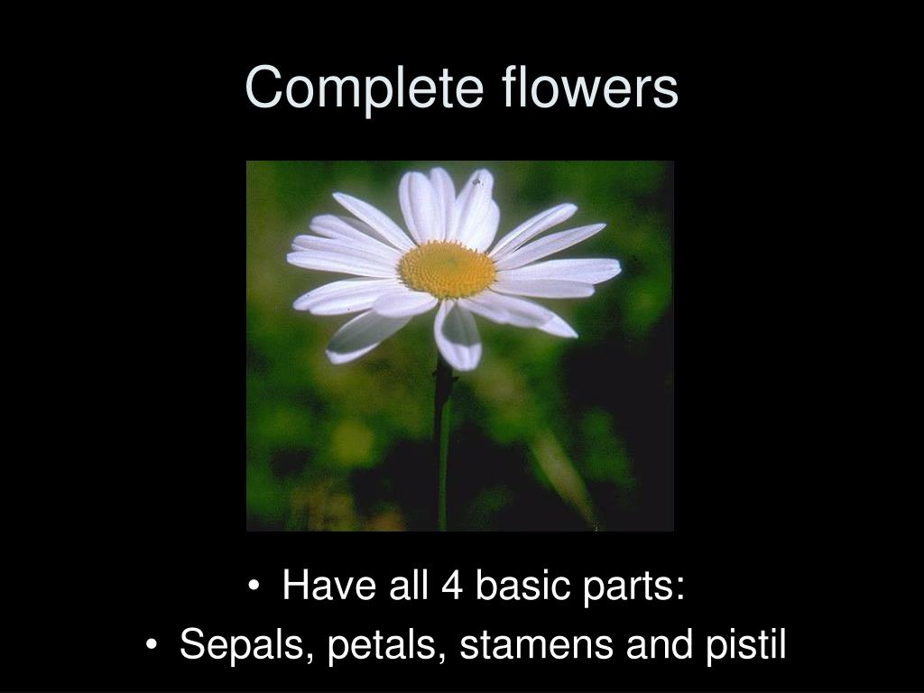Complete flowers