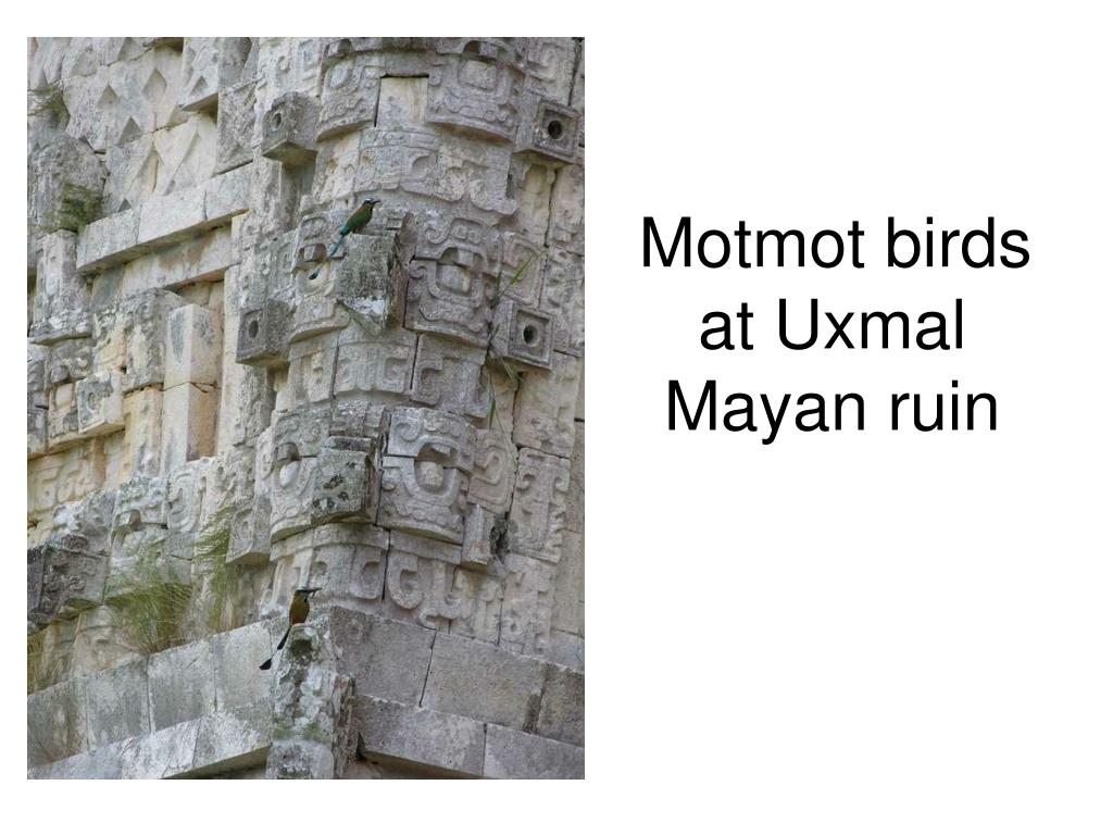 Motmot birds at Uxmal Mayan ruin