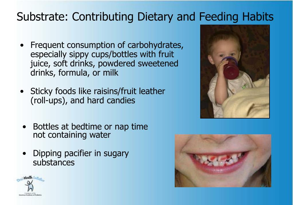 Substrate: Contributing Dietary and Feeding Habits