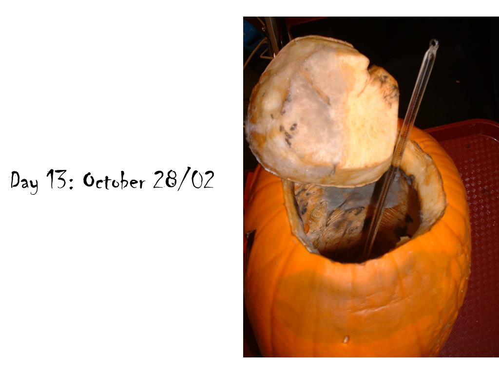 Day 13: October 28/02
