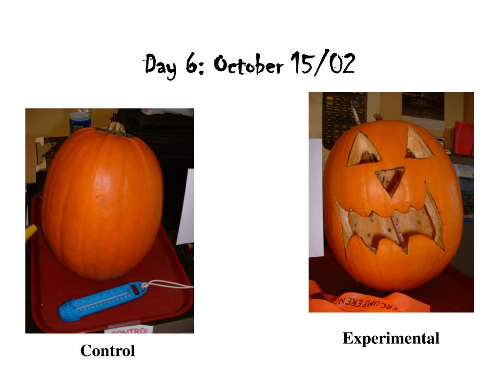Day 6: October 15/02