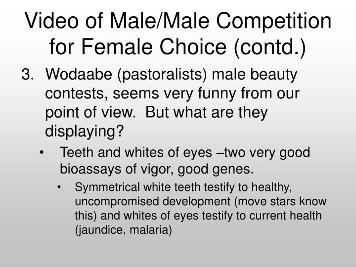Video of Male/Male Competition for Female Choice (contd.)