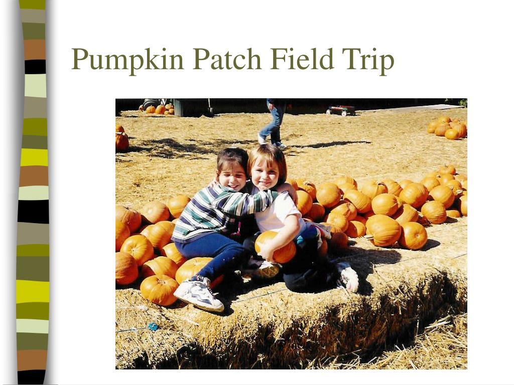 Pumpkin Patch Field Trip
