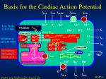 basis for the cardiac action potential