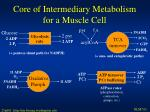 core of intermediary metabolism for a muscle cell