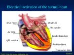 electrical activation of the normal heart