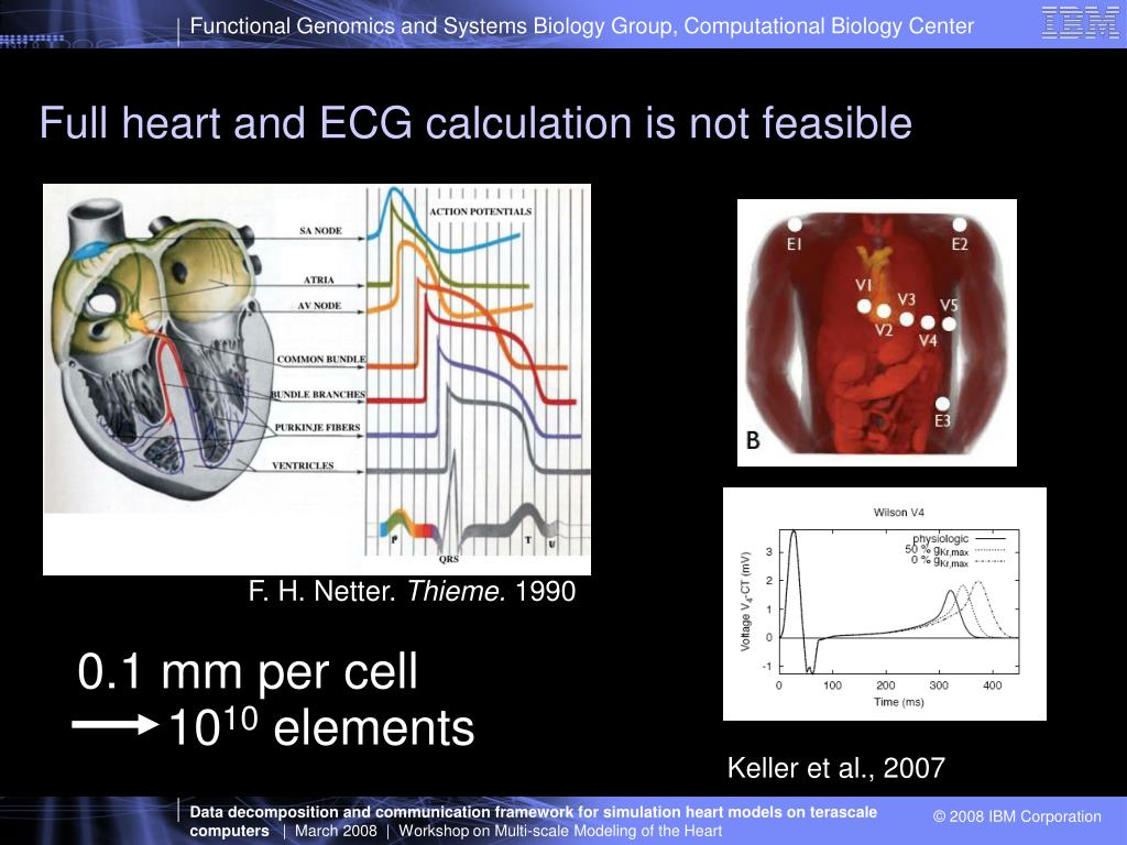 Full heart and ECG calculation is not feasible