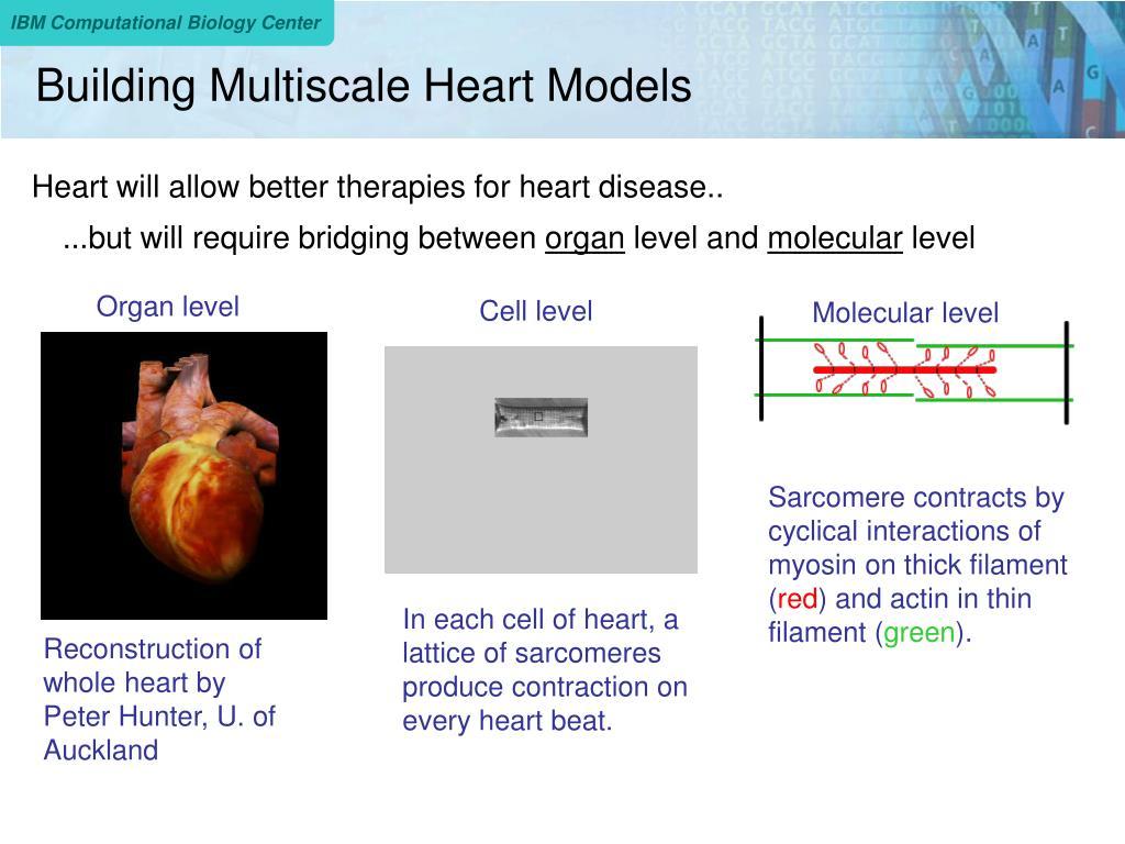 Building Multiscale Heart Models