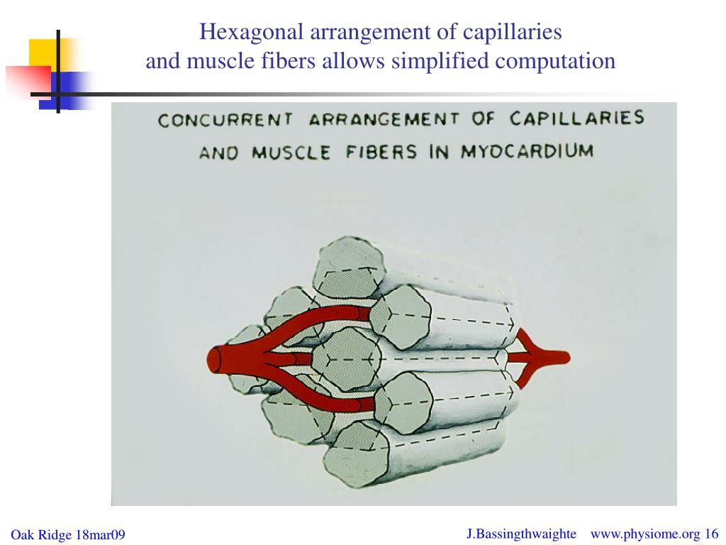 Hexagonal arrangement of capillaries