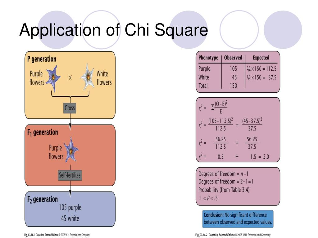Application of Chi Square
