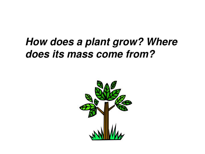 How does a plant grow? Where does its mass