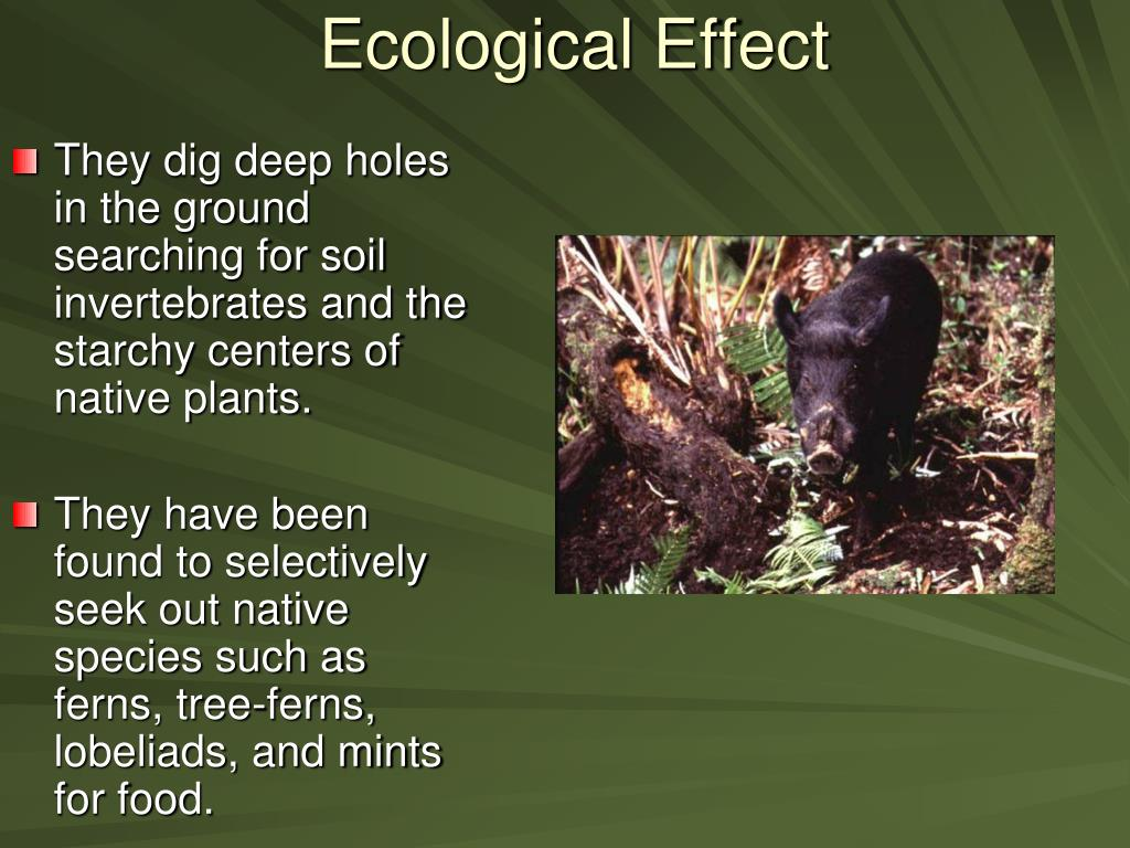 Ecological Effect