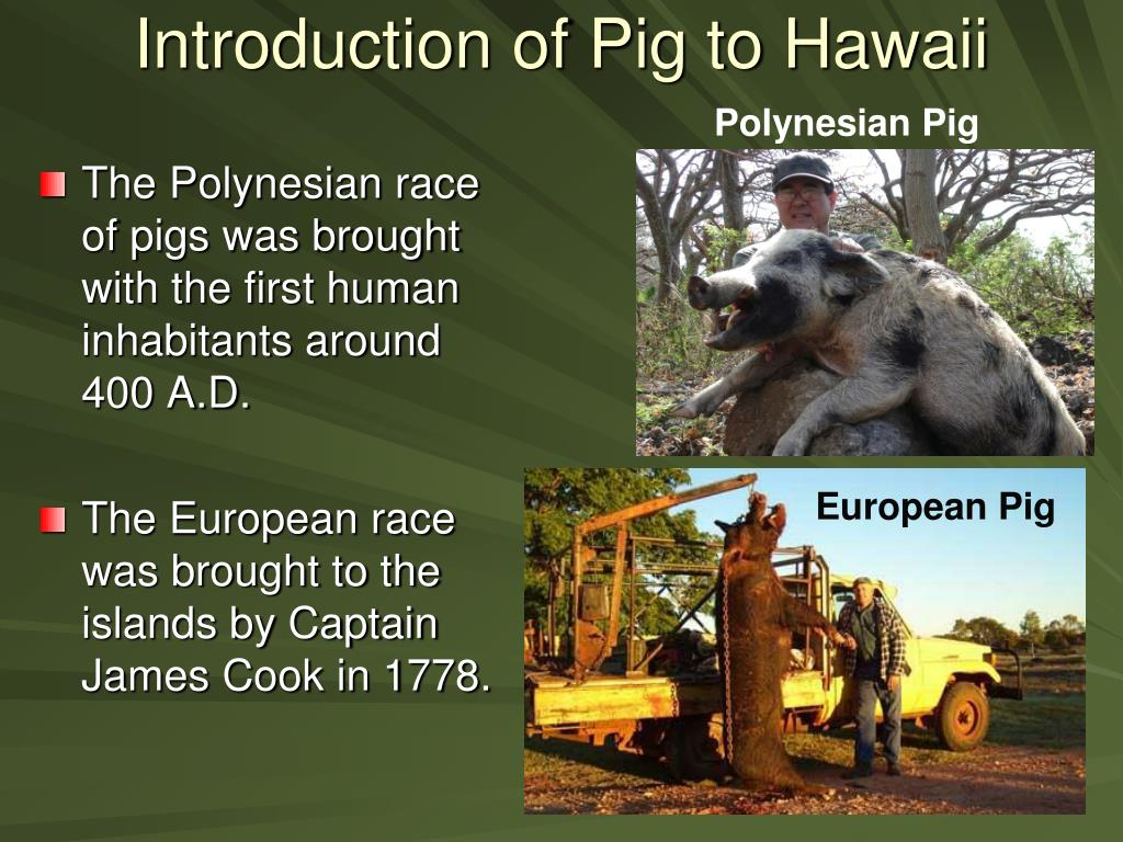 Introduction of Pig to Hawaii