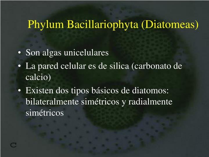 Phylum Bacillariophyta (Diatom