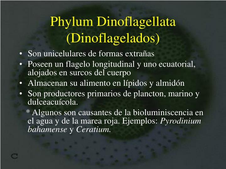 Phylum Dinoflagellata