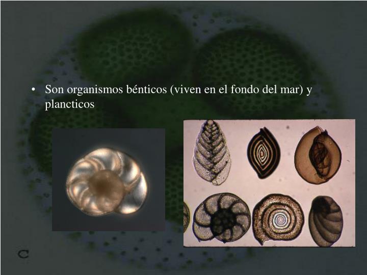 Son organismos bénticos (viven en el fondo del mar) y plancticos