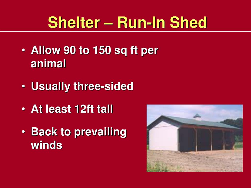 Shelter – Run-In Shed