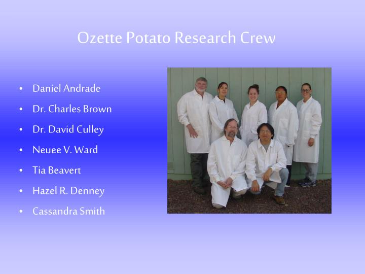 Ozette potato research crew