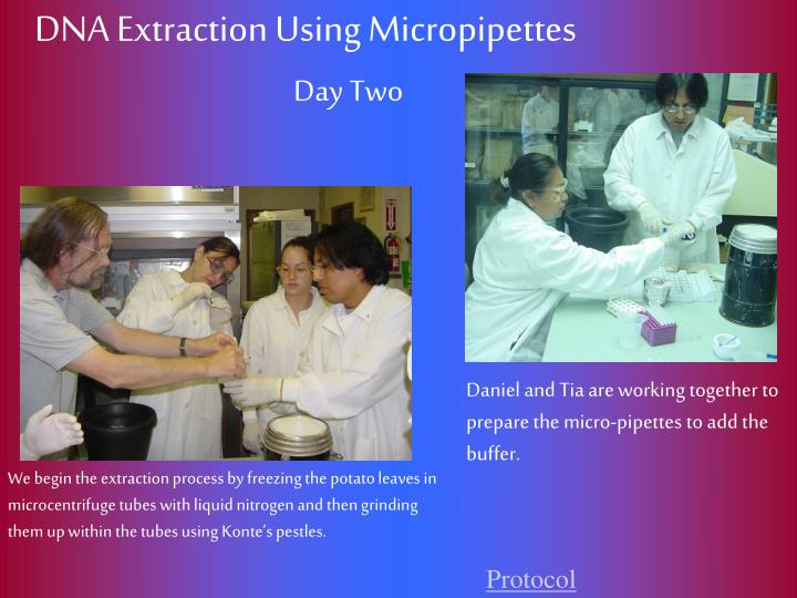 DNA Extraction Using Micropipettes