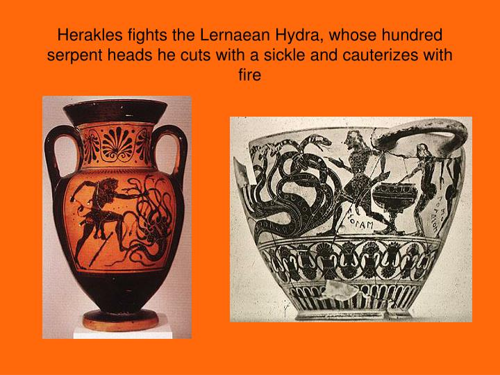 Herakles fights the Lernaean Hydra, whose hundred serpent heads he cuts with a sickle and cauterizes with fire