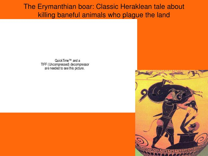 The Erymanthian boar: Classic Heraklean tale about killing baneful animals who plague the land
