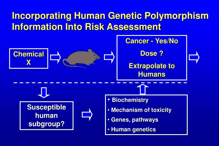 Incorporating Human Genetic Polymorphism Information Into Risk Assessment