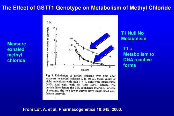 The Effect of GSTT1 Genotype on Metabolism of Methyl Chloride