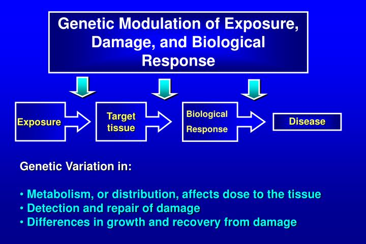 Genetic Modulation of Exposure, Damage, and Biological Response