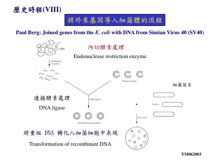 內切酵素處理