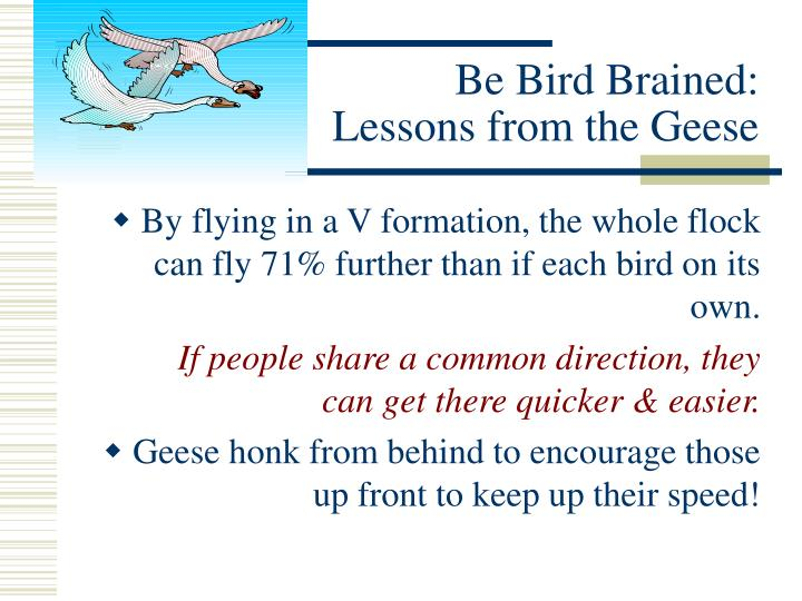 Be Bird Brained: