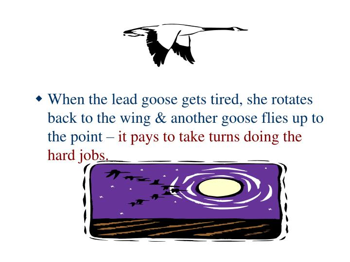 When the lead goose gets tired, she rotates back to the wing & another goose flies up to the point