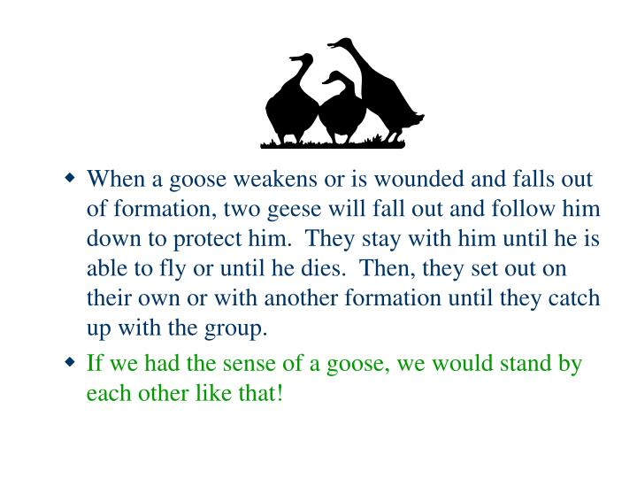 When a goose weakens or is wounded and falls out of formation, two geese will fall out and follow him down to protect him.  They stay with him until he is able to fly or until he dies.  Then, they set out on their own or with another formation until they catch up with the group.