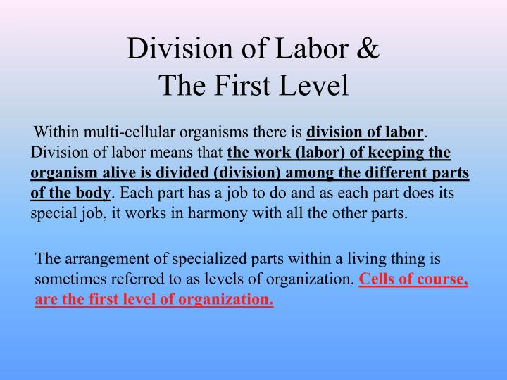 Division of labor the first level