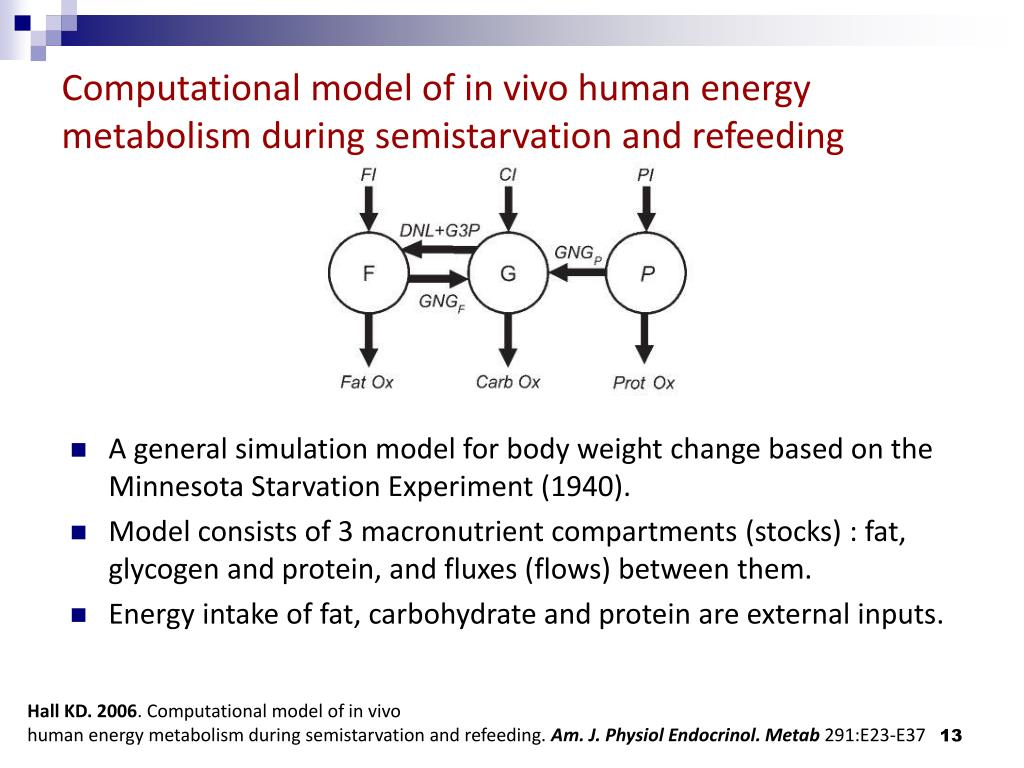 Computational model of in vivo human energy metabolism during semistarvation and refeeding