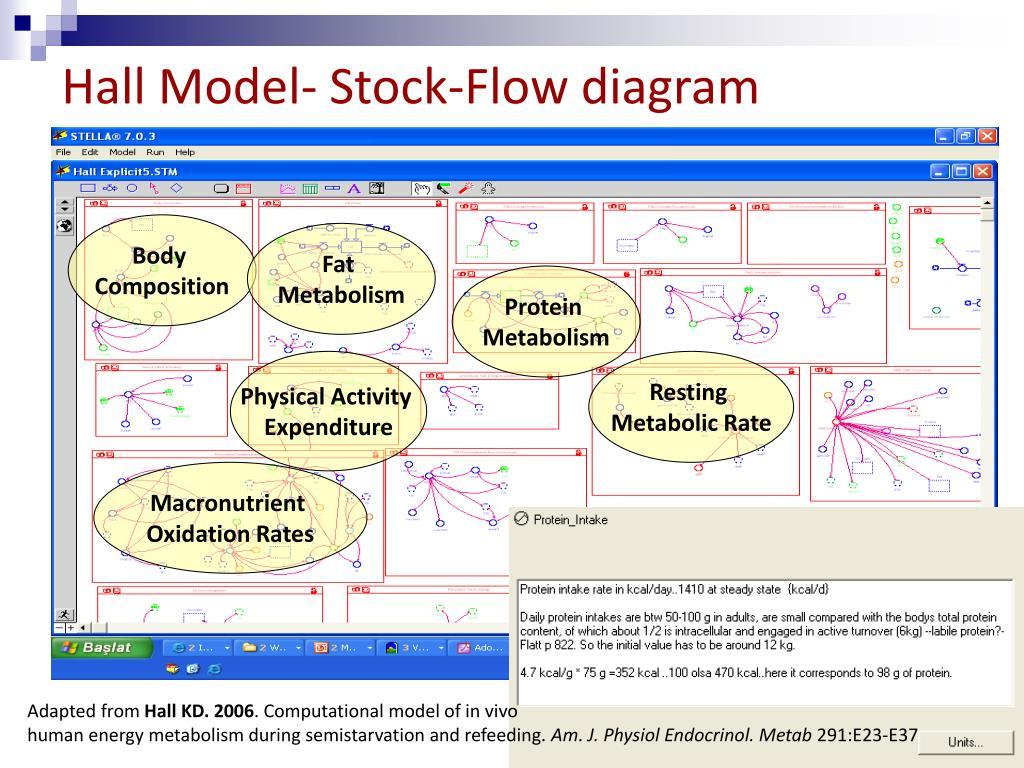 Hall Model- Stock-Flow diagram