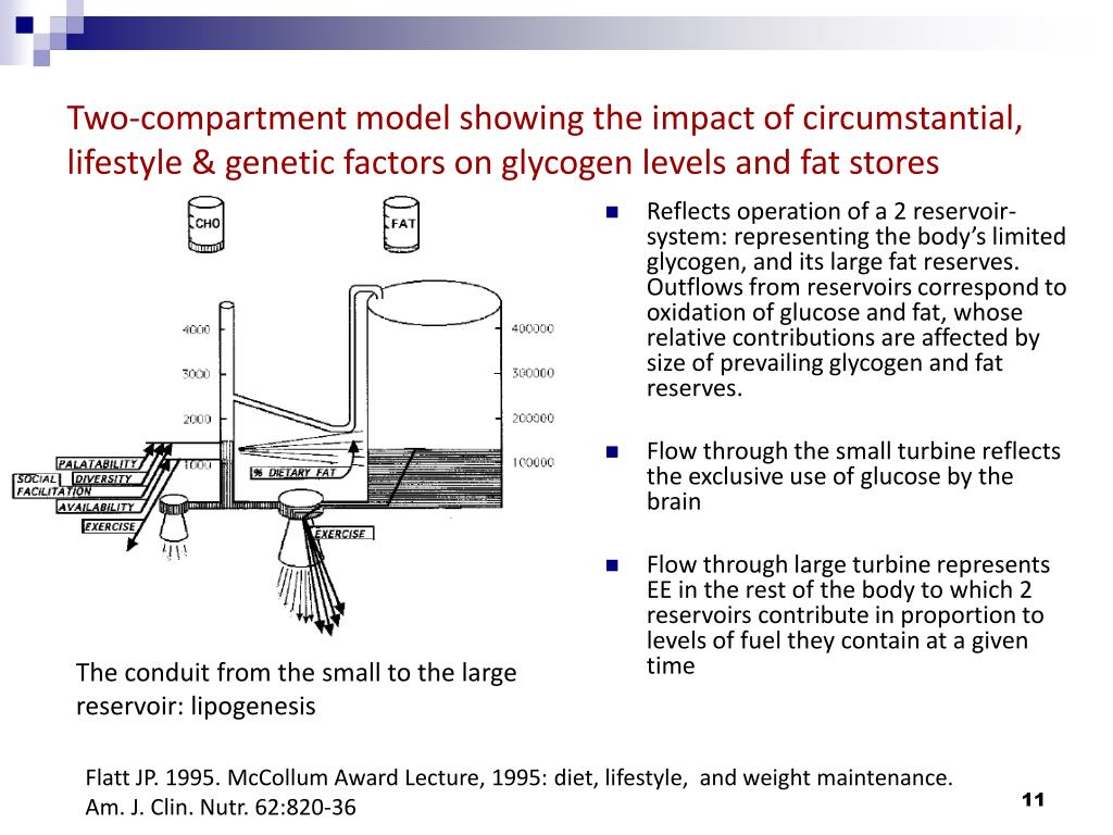 Two-compartment model showing the impact of circumstantial, lifestyle & genetic factors on glycogen levels and fat stores