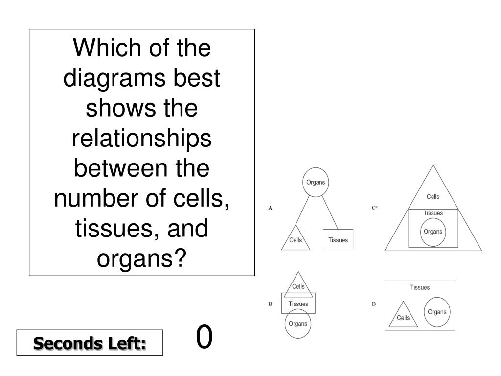 Which of the diagrams best shows the relationships between the number of cells, tissues, and organs?
