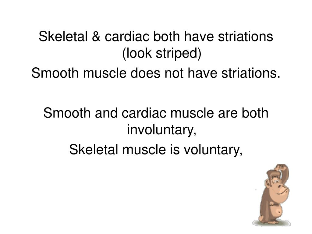 Skeletal & cardiac both have striations (look striped)