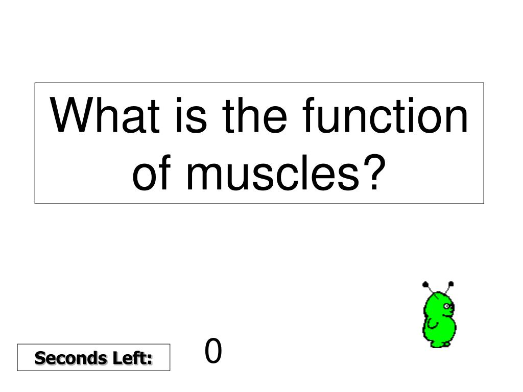 What is the function of muscles?