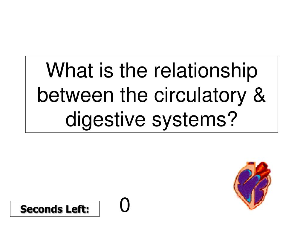 What is the relationship between the circulatory & digestive systems?
