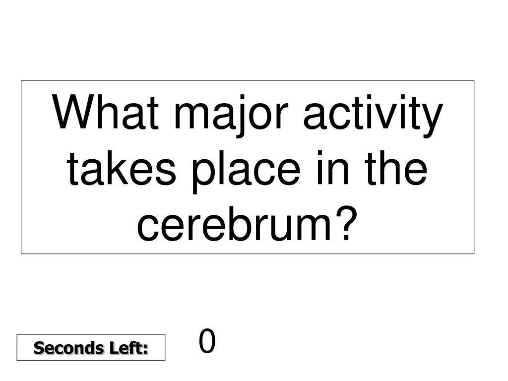 What major activity takes place in the cerebrum?
