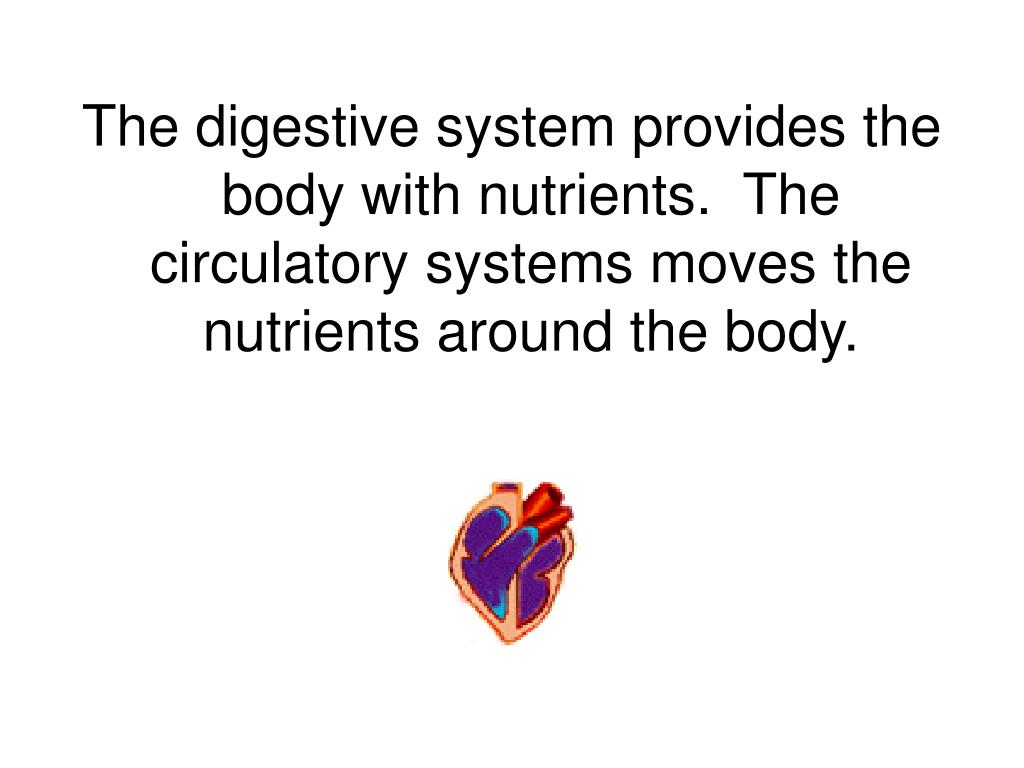 The digestive system provides the body with nutrients.  The circulatory systems moves the nutrients around the body.